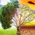Un cuento con moraleja: El árbol de los problemas