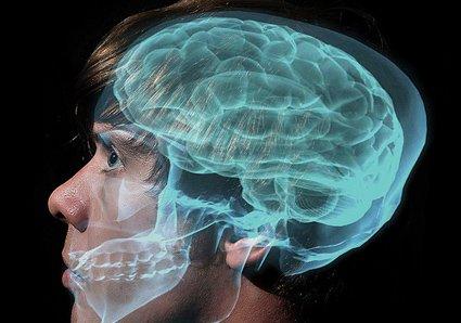 Cerebro en vivo