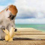 La paradoja de los monos y los plátanos