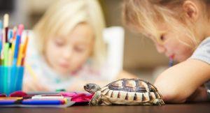 La Técnica de la Tortuga y el autocontrol en niños