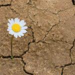 Cómo descubrir tu resiliencia