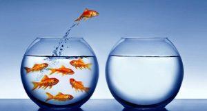 Atrévete a tomar decisiones: La metáfora del pez y la pecera
