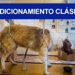 Condicionamiento Clásico: Definición, Conceptos y Autores