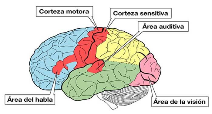 Los Sistemas Sensoriales: Definición, Tipos y Niveles