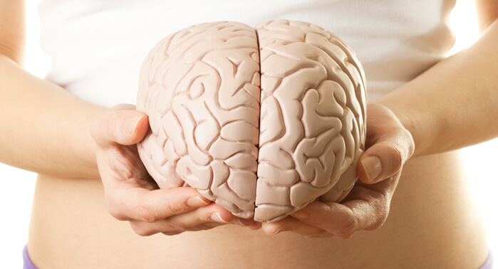 desarrollo-cognitivo-adultez
