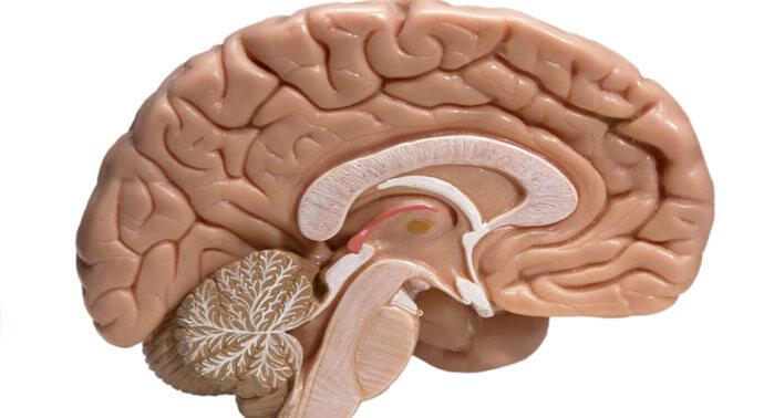 desarrollo-sistema-nervioso
