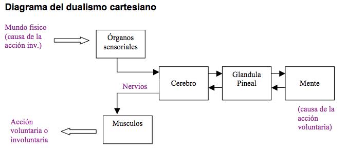 dualismo-cartesiano