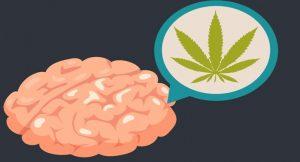 Efectos de la Marihuana en el Cerebro: Sistema Endocanabinoide