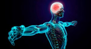 filogenia-sistema-nervioso
