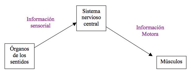 informacion-sensorial