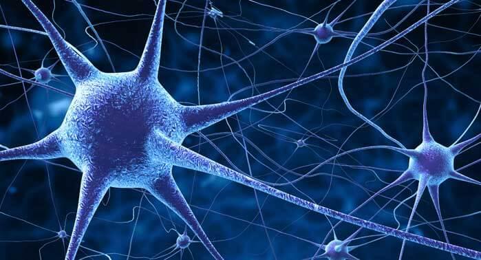 comunicacion-neuronal