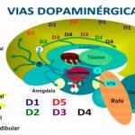 Vías dopaminérgicas y su relación con la esquizofrenia