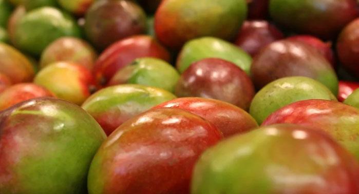 mango-deshidratado