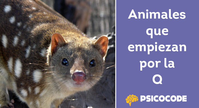 Animales que empiezan por la Q