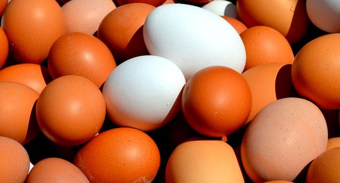 huevos marrones blancos